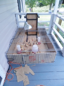 Easy Cheap Chick Brooder